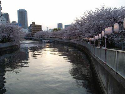 Sakuraminnaka1
