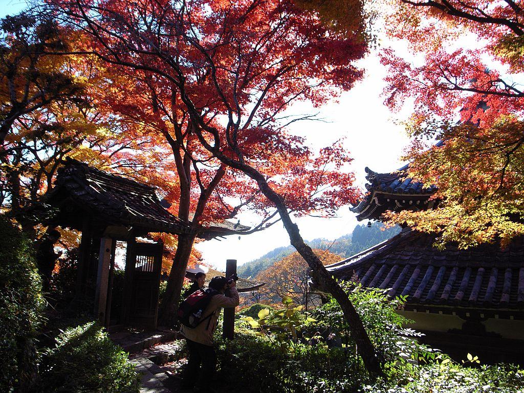 Kyoto02jpg_2